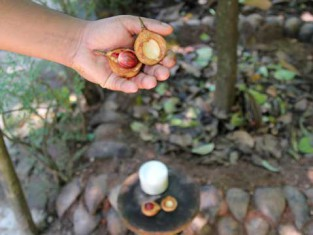Spice garden Sri Lanka
