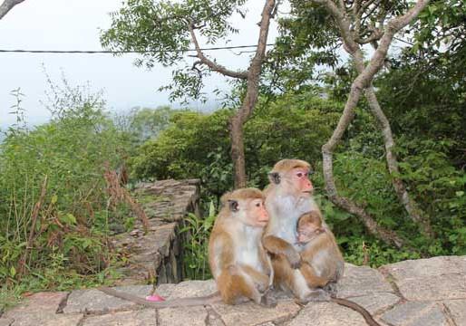 Family tours in Sri Lanka