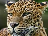 Leopard Park of Wilpattu - Sri Lanka