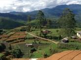 Tea fields Sri Lanka