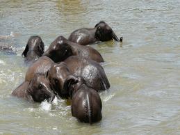 orphelinat-des-éléphants