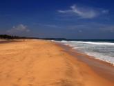 Beach Araliya